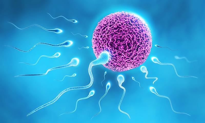 Erken boşalma spermler boşa gitmesin